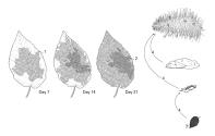 extinction_leaf